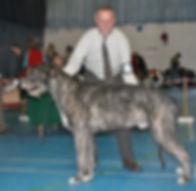 Limit Show 2015 Limit Dog 5E 3abs Caredig Caradog