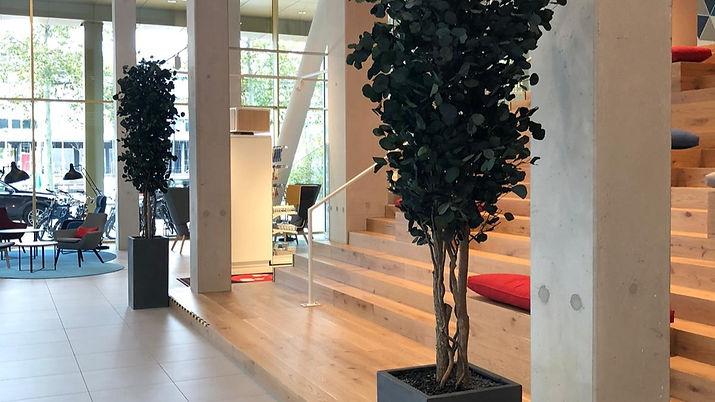 Populus%20Preserved Tree Holiday Inn_edi