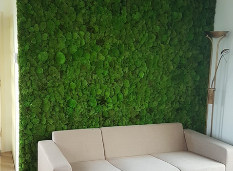 Preserved Green Walls and Living Green Walls