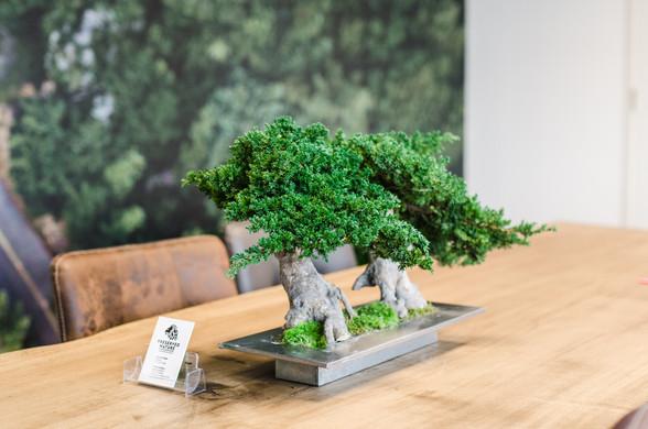 Bonsai Double Root