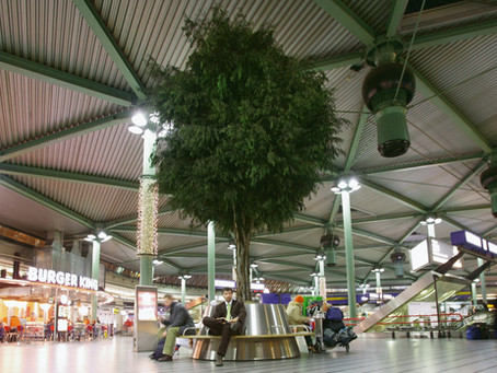 Preserved, Living and Artificial Trees