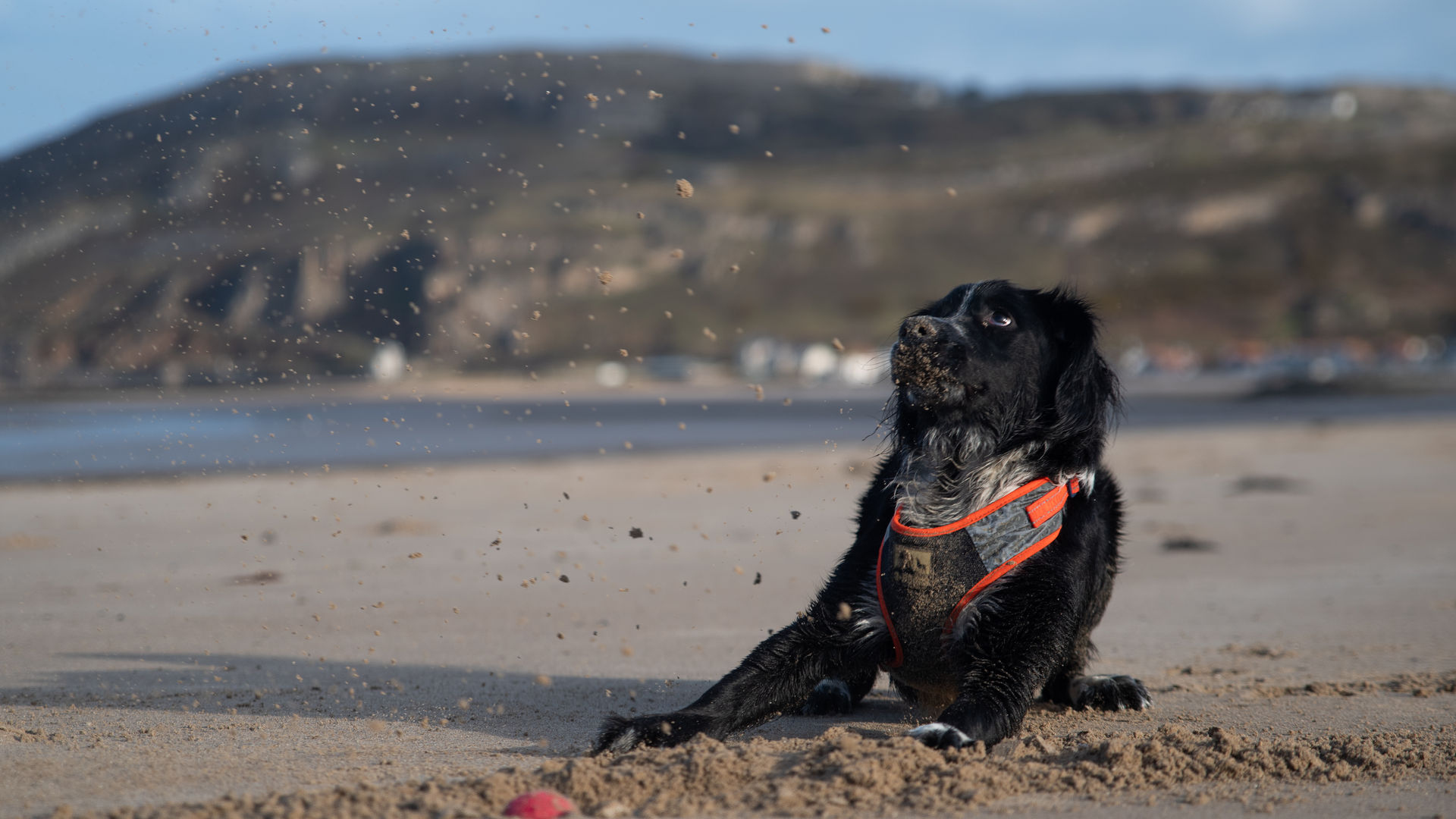 pet photography llandudno
