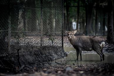 写真教室 大阪  奈良公園