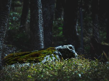 ~フォトカウンセリング~自然と通じる新しい形の写真教室