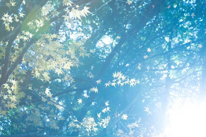 写真教室 大阪  奈良