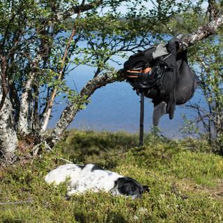 Stumpen ved Muggsjøen