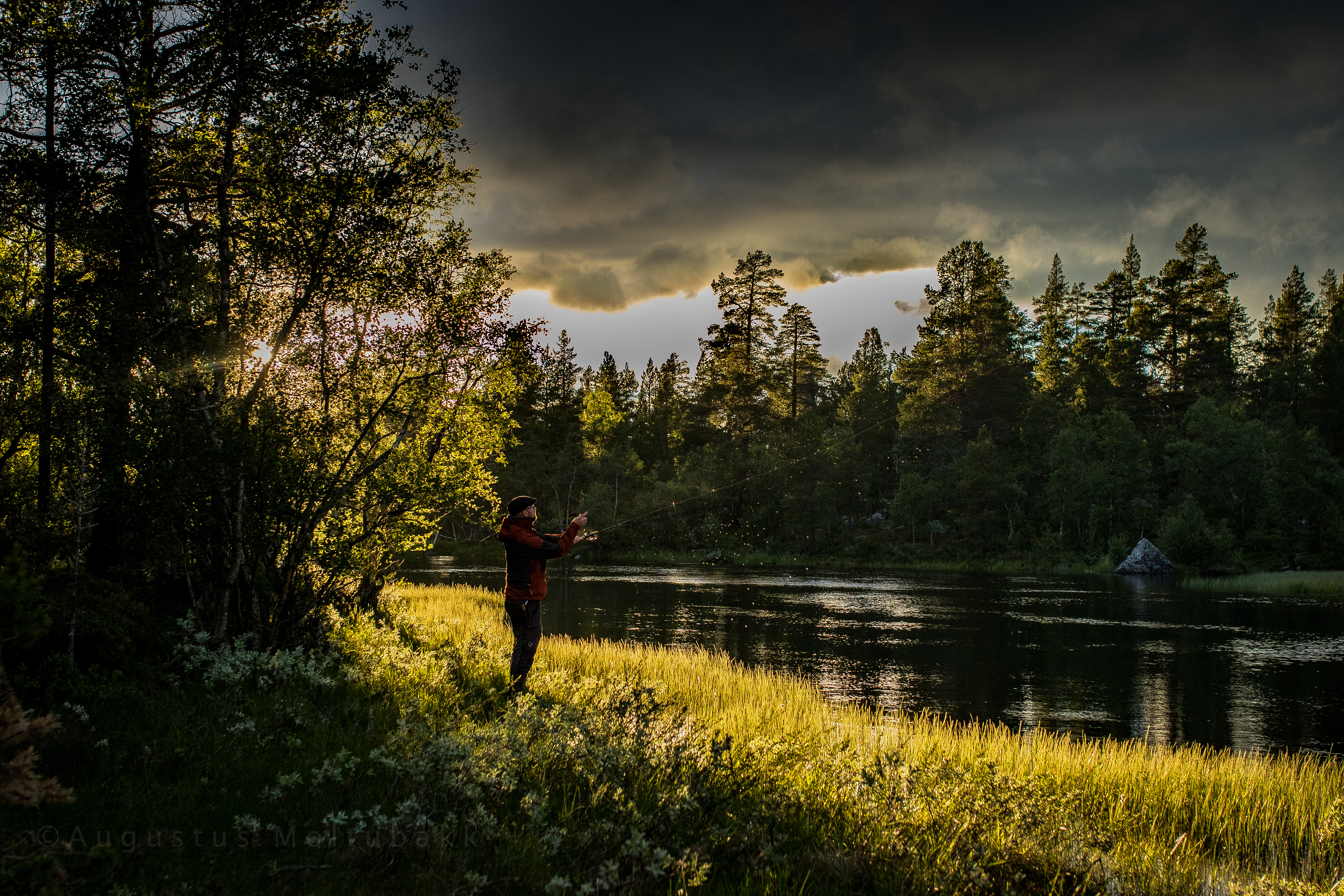 Leopold fisker i flott lys