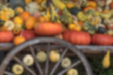 structure-decoration-orange-food-golden-