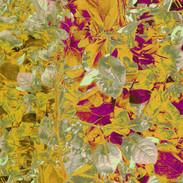 foliage 2.2.jpg