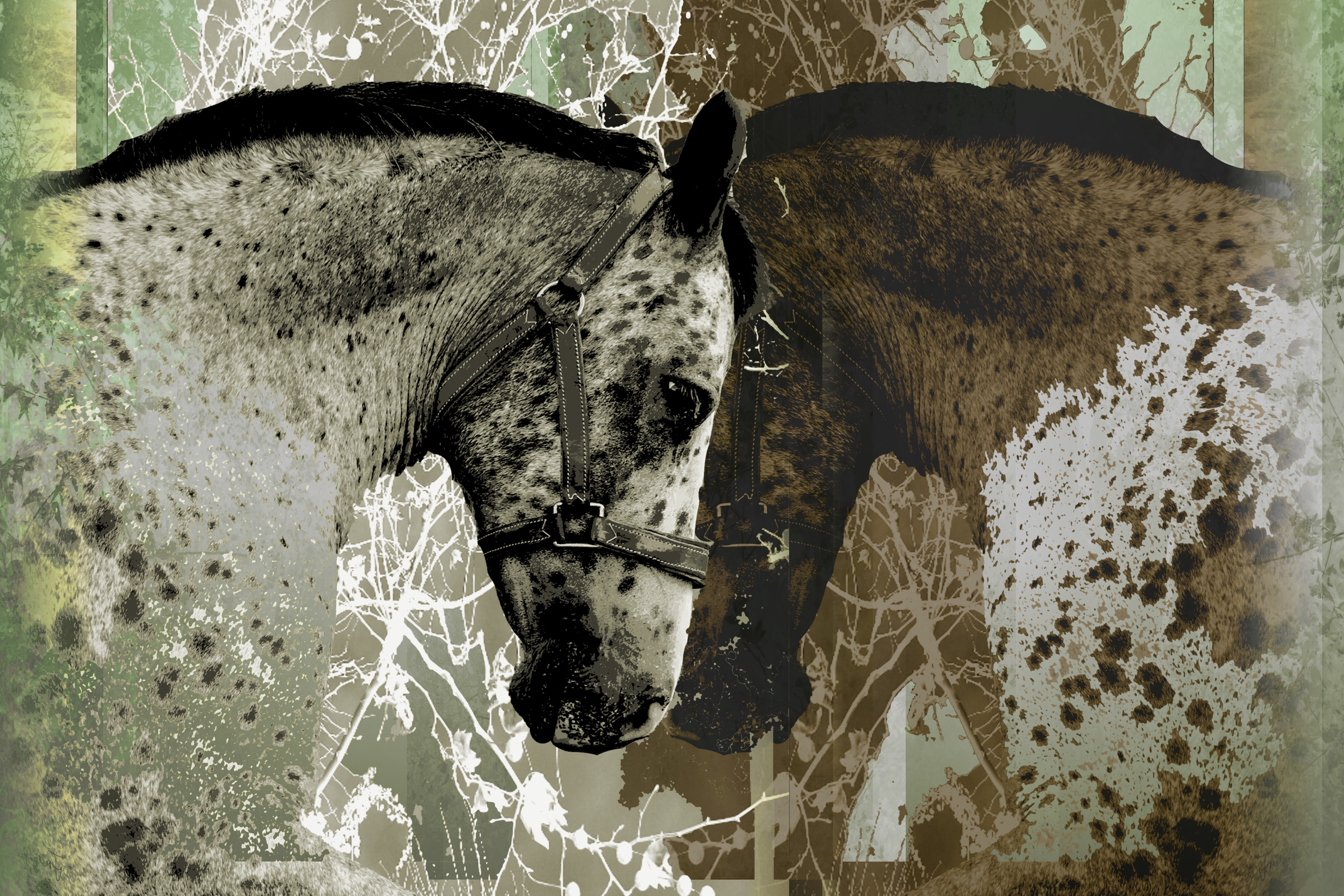 horse whisper 1