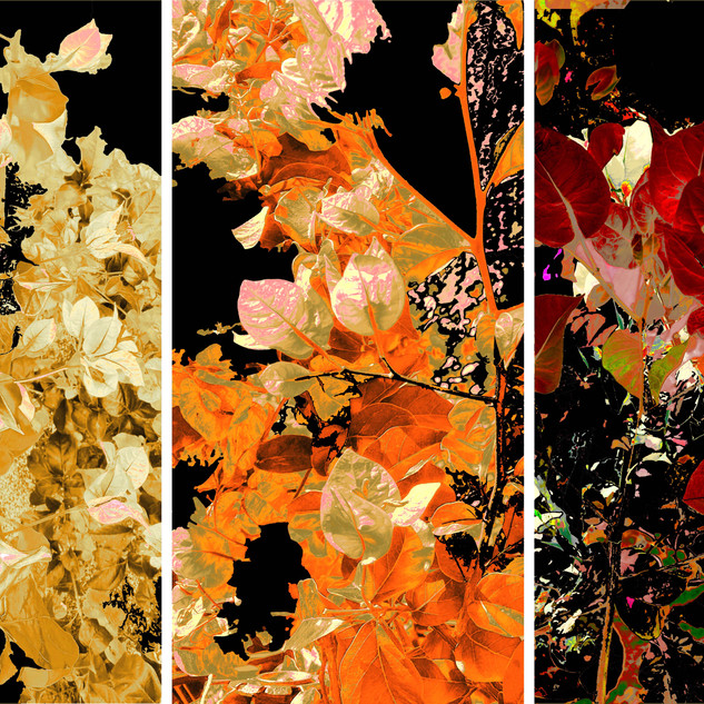 flower triptych 1.2