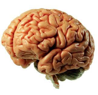טיפול אנרגטי המשלב מגע ועבודה עם המוח