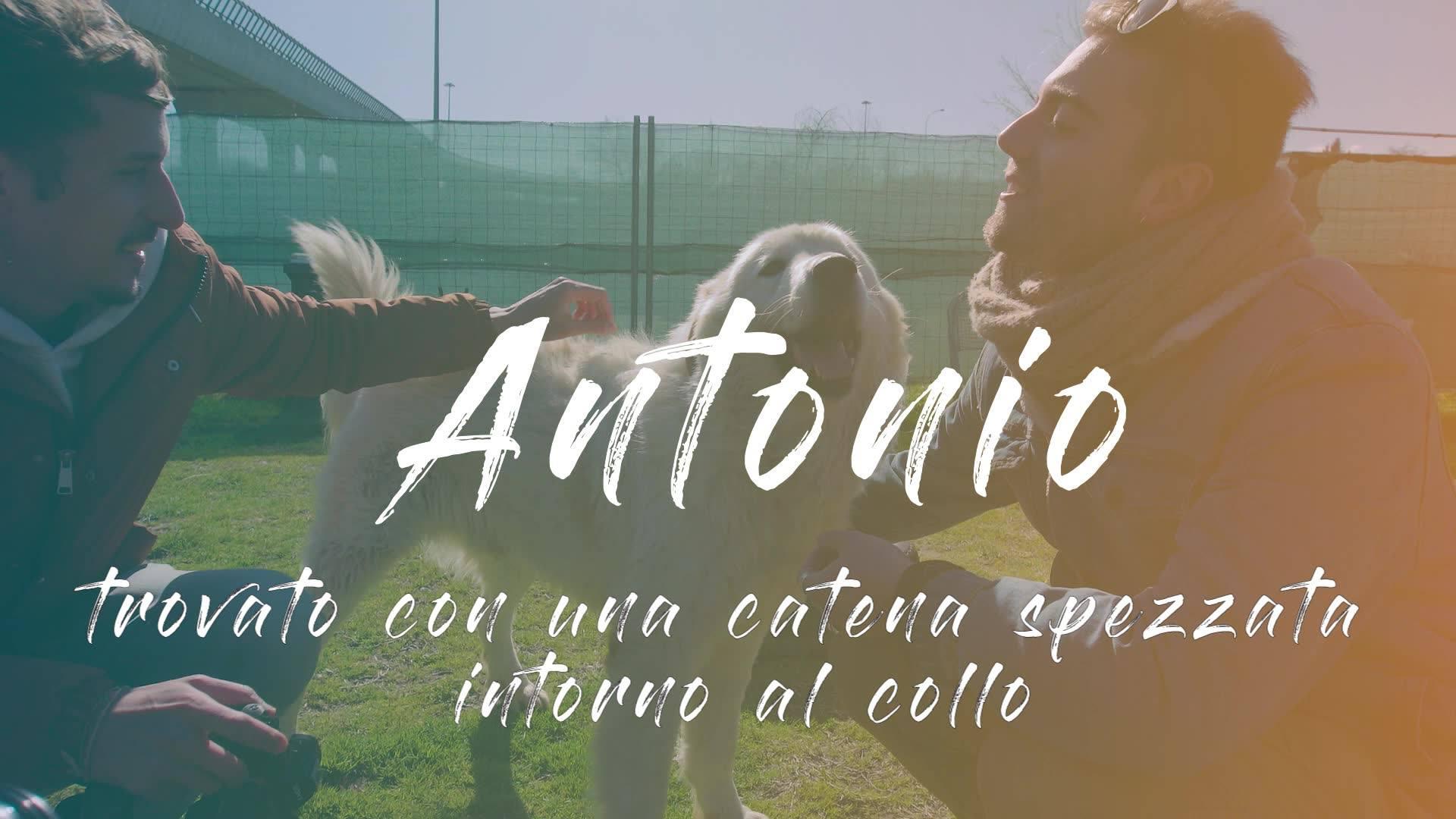 FUORI DAL CANILE - ANTONIO