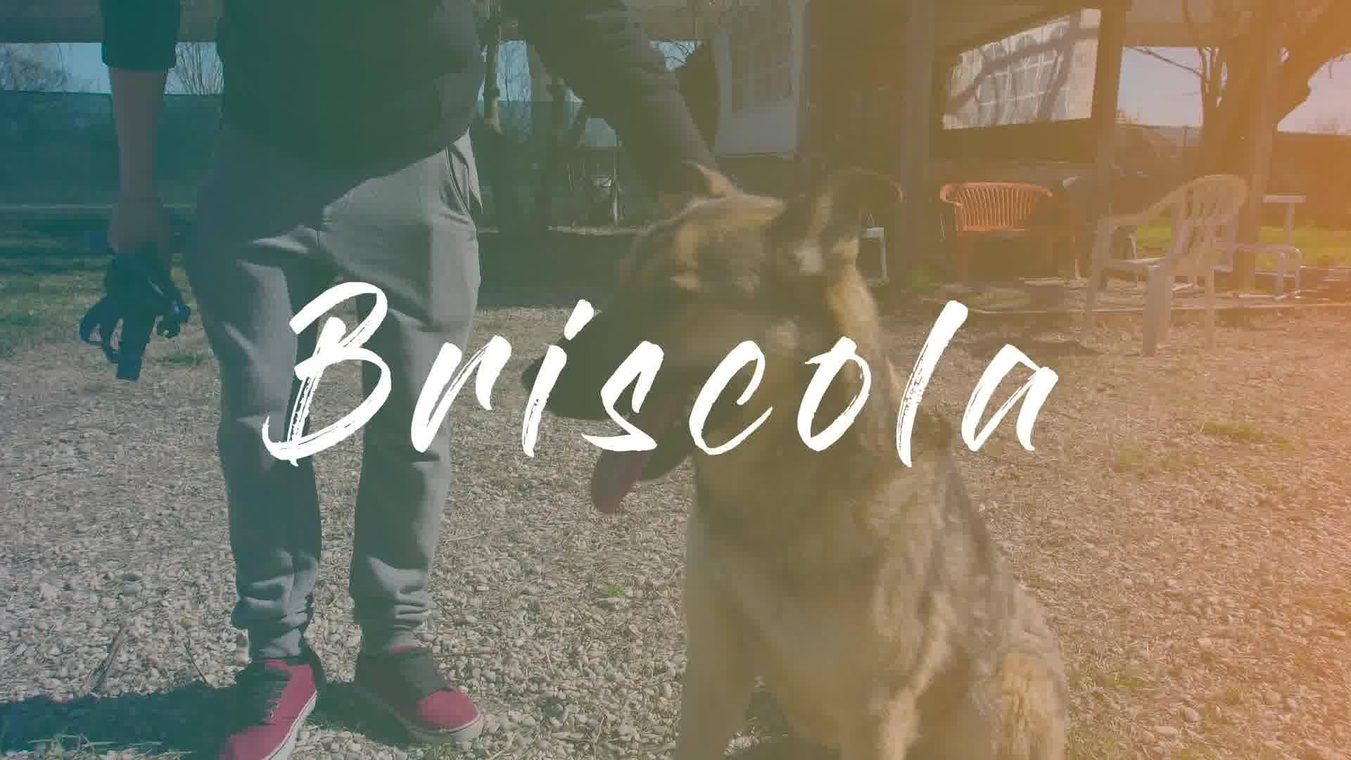 FUORI DAL CANILE - BRISCOLA