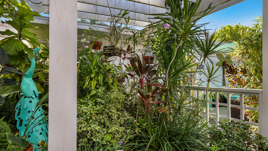 Bird of Paradise orchid garden