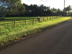 Hale Kokio Kilauea Neighborhood