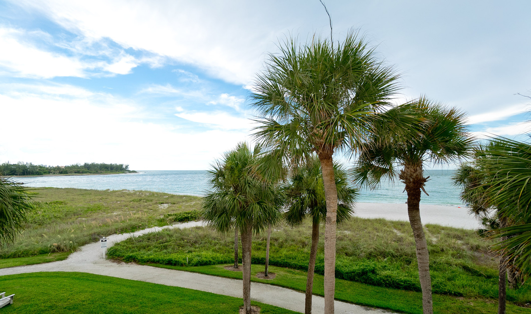 Majestic palms overlooking the Gulf