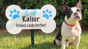 Did you know you can also order a dog sign with your stork rental?