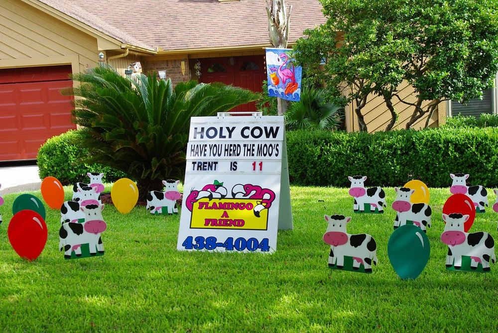 yard, cow, garden, sign
