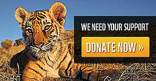 Donate to Tigers