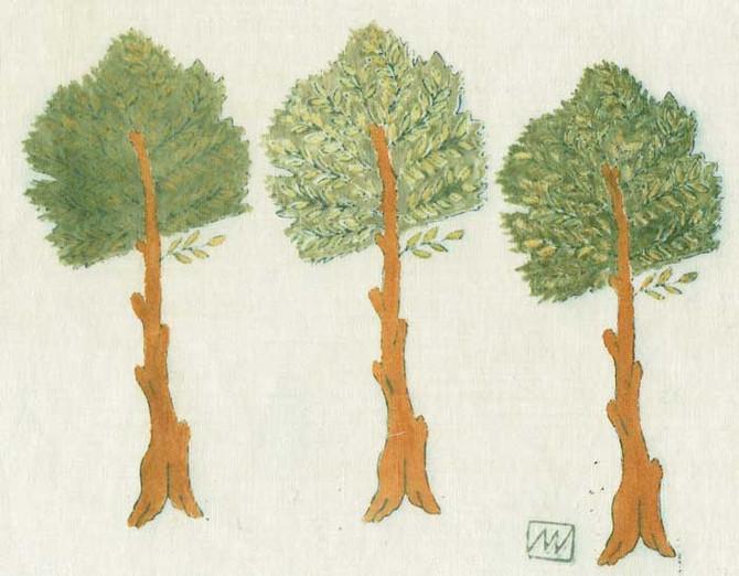 Des petits arbres