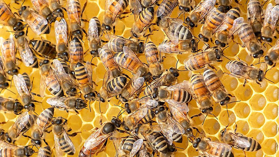 211101 | Mit Bienen leben |  8.-12. März 2021