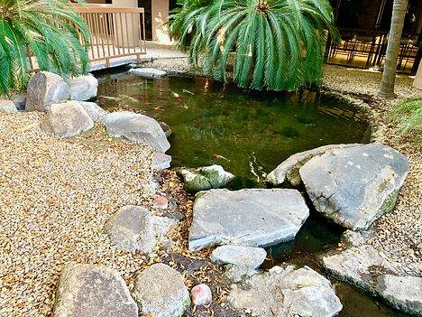 Outdoor pond in office complex breezeway with orange and white  koi fish, palm trees, and rocks.