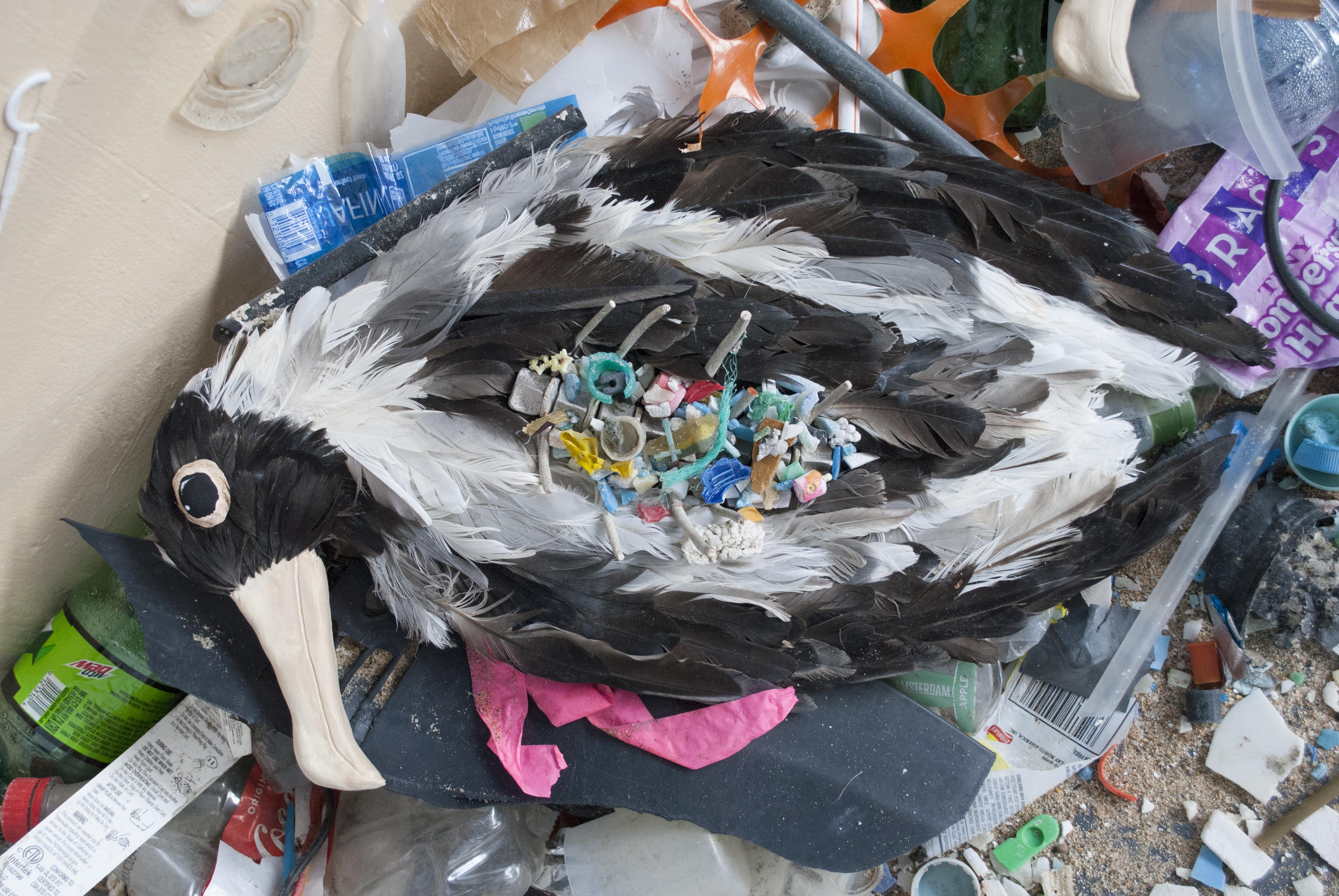 Albatross 2 - Death by Plastic