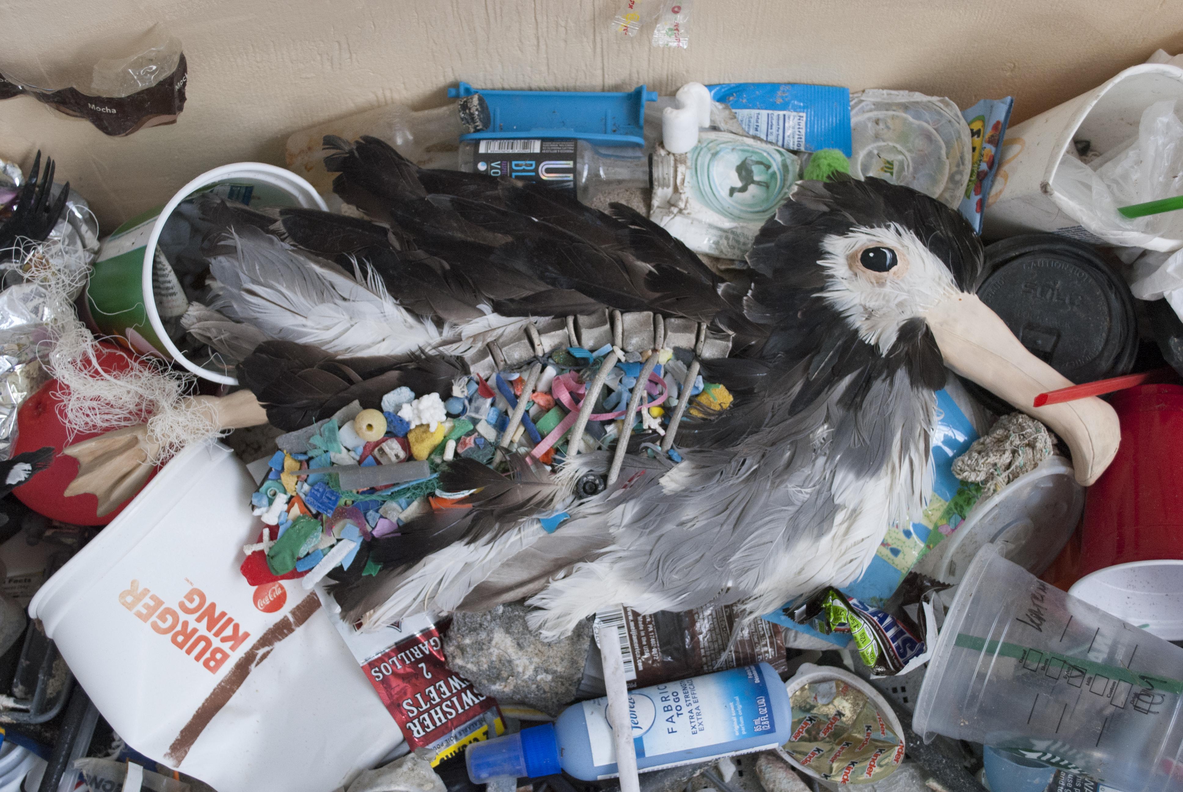 Albatross 3 - Death by Plastic