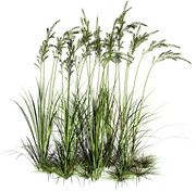 lawn-plant-grass.png