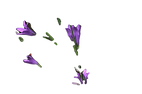 small-purple-lily-wildflower_edited.png