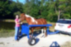 horse stocks mobile equine vet