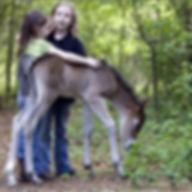 twin foals conway sc horse equine vet
