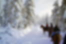 poney ballade neige.png