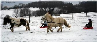 poney luge.png