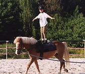 poney voltige.png