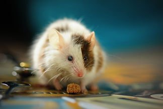 cute mouse for website.jpeg