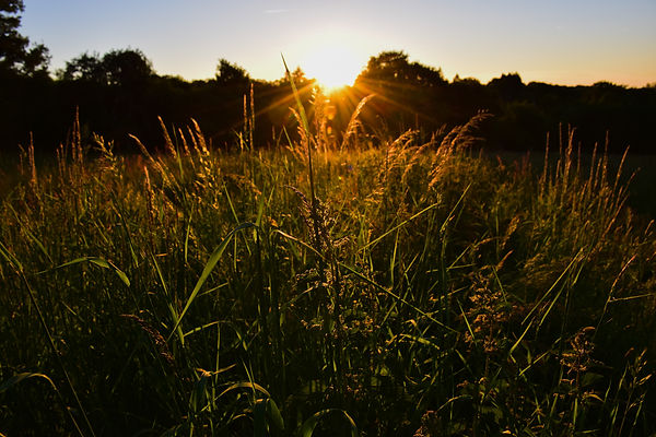 Coucher de soleil sur le terrain