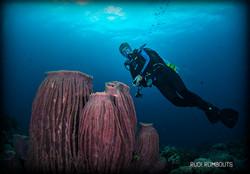 Ligpo Cavern Barrel Sponges