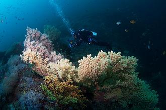 Pinnacle Reef stunning soft corals Portulano Resort scuba diving