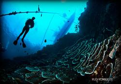 Dive and Trek