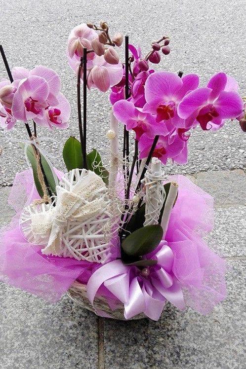 Zwei Orchideen im Übertopf oder Korb mit Dekor