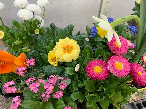 Frühlingsmix  gemischte Frühlingsblüher im Korb mit Dekoration