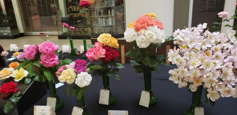 rose show.jpeg
