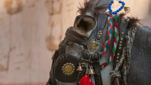 Decorated Donkey
