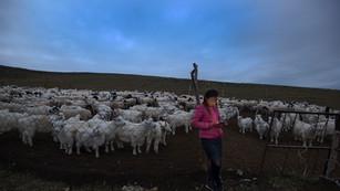 On The Grid, Inner Mongolia