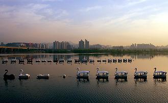 Swans_korea.jpg