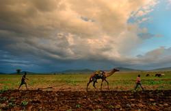 Family Farm Camel