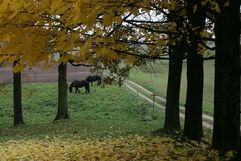 Autumn Horses