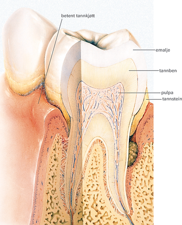 tannlege i fredrikstad